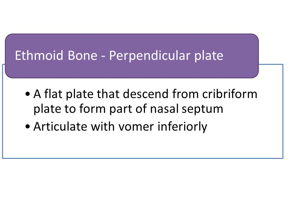 Articulate with perpendicular plate of ethmoid, maxilla, palatine and sphenoid bone and septal cartilage Posterior border no articulation with other bone Vomer