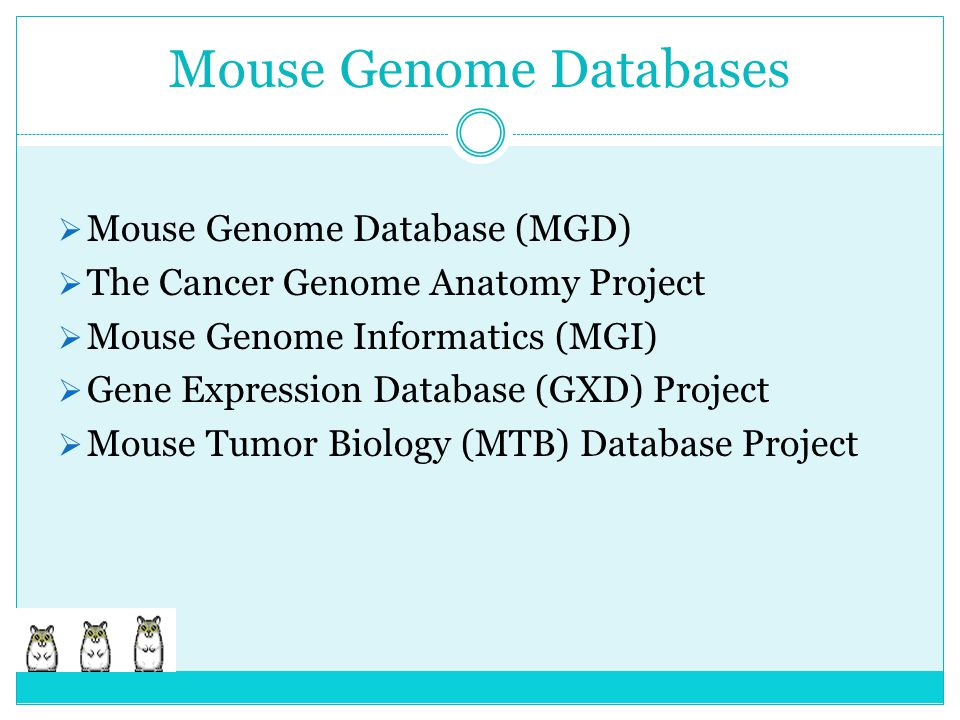 Mouse Genome Databases  Mouse Genome Database (MGD)  The Cancer Genome Anatomy Project  Mouse Genome Informatics (MGI)  Gene Expression Database (