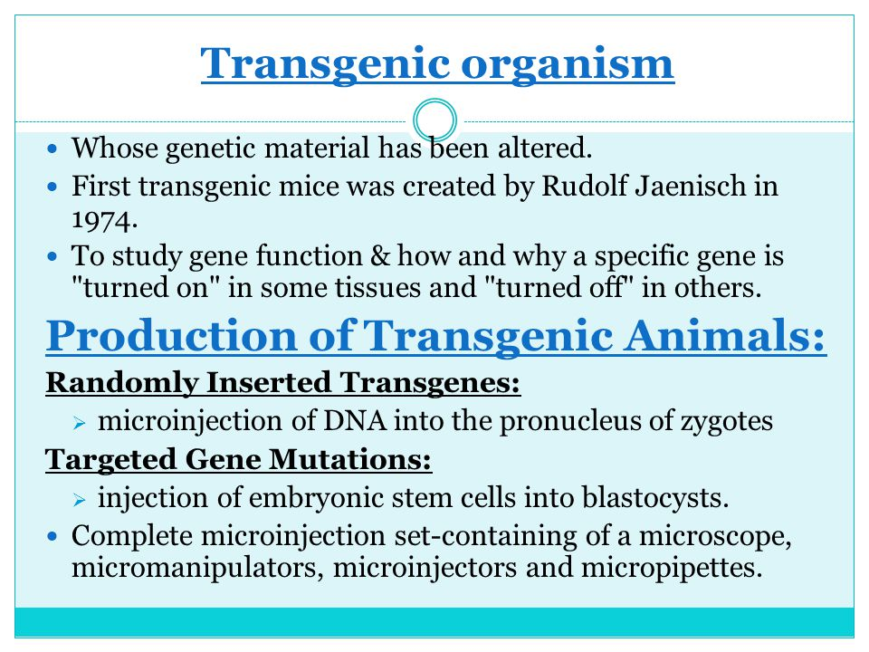 Transgenic organism Whose genetic material has been altered. First transgenic mice was created by Rudolf Jaenisch in 1974. To study gene function & ho