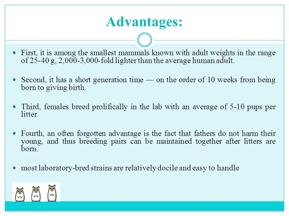 Advantages: First, it is among the smallest mammals known with adult weights in the range of 25-40 g, 2,000-3,000-fold lighter than the average human
