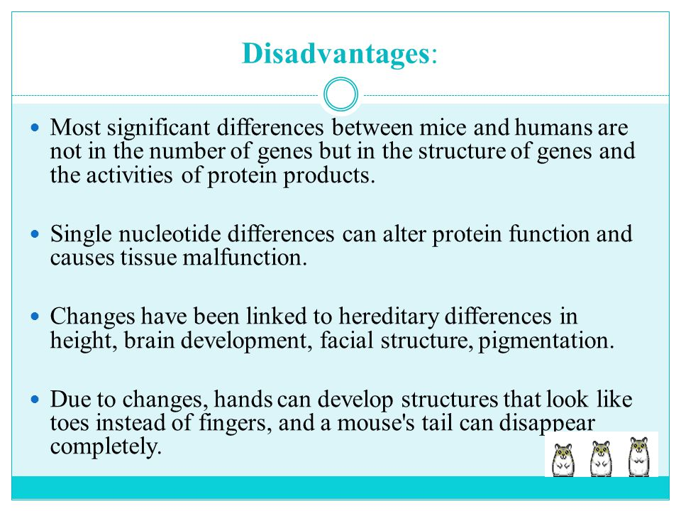 Disadvantages: Most significant differences between mice and humans are not in the number of genes but in the structure of genes and the activities of