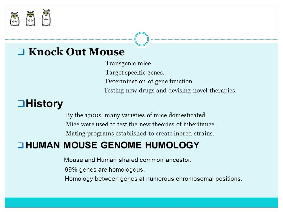  Knock Out Mouse Transgenic mice. Target specific genes. Determination of gene function. Testing new drugs and devising novel therapies.  History By