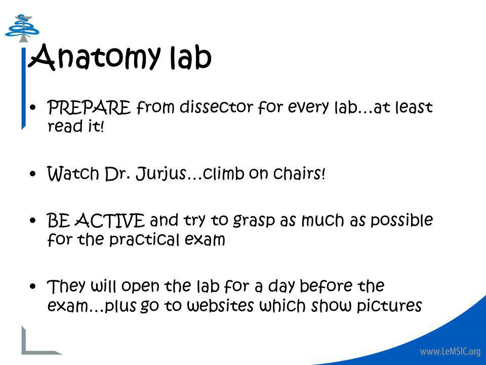 PREPARE from dissector for every lab…at least read it! Watch Dr. Jurjus…climb on chairs! BE ACTIVE and try to grasp as much as possible for the practi