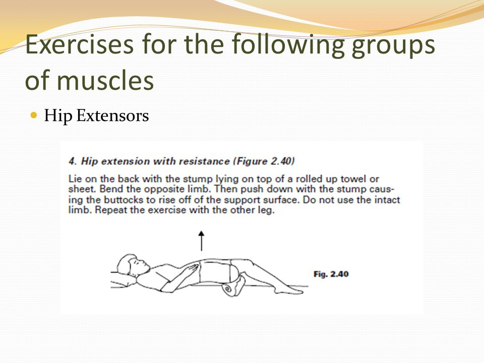 Exercises for the following groups of muscles Hip Extensors