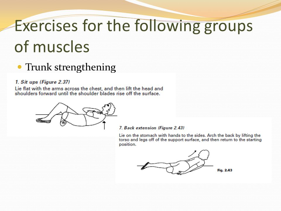 Exercises for the following groups of muscles Trunk strengthening