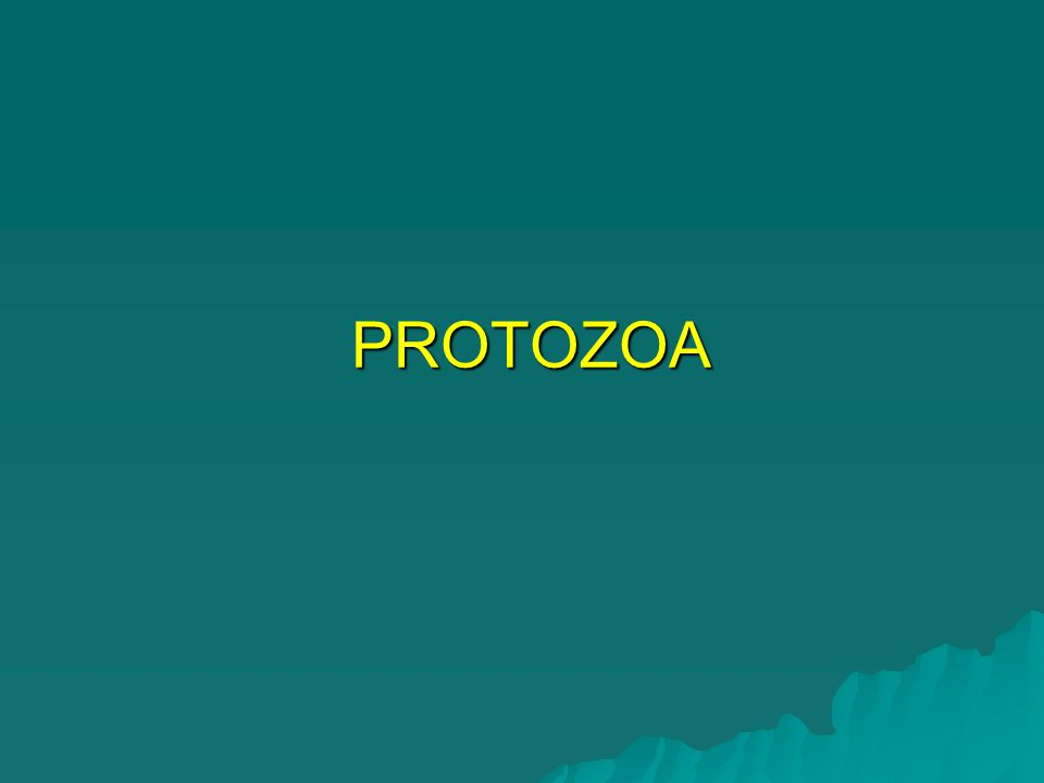 SARCODINA (AMOEBAE)  ENTAMOEBA histolytica –90% commensal strain – Amoebic infection (asymptomatic) 10% invasive strain – Amoebic disease 10% invasive strain – Amoebic disease –MOT – ingestion of mature cyst