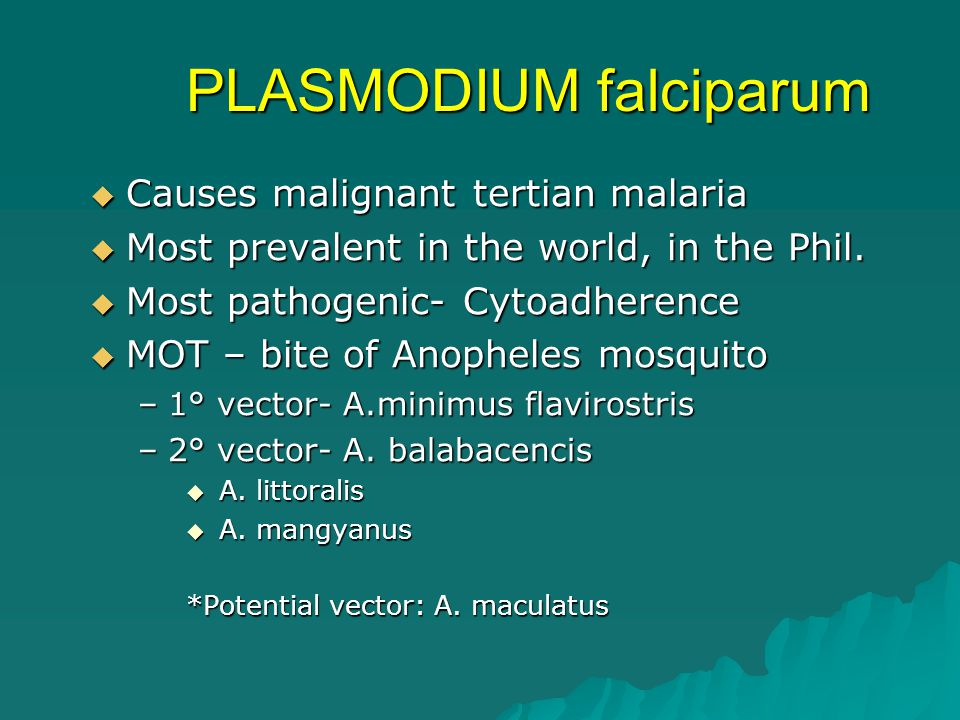 PLASMODIUM falciparum  Causes malignant tertian malaria  Most prevalent in the world, in the Phil.  Most pathogenic- Cytoadherence  MOT – bite of