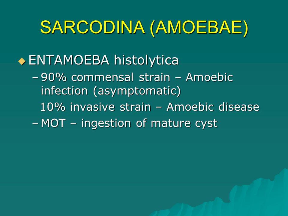 SARCODINA (AMOEBAE)  ENTAMOEBA histolytica –Distribution 1.