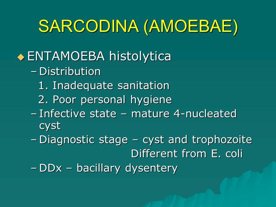 AMOEBIC BACILLARY DYSENTERYDYSENTERY Gradual onsetAcute onset (-) Fever, vomiting(+) fever, vomiting Bloody, mucoidWatery, bloody Offensive smellOdorless Acid pHAlkaline pH Few pus cellsMany pus cells (+) Motile amoebae(-) Amoebae