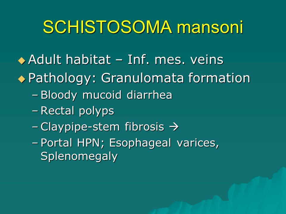 SCHISTOSOMA mansoni  Adult habitat – Inf. mes. veins  Pathology: Granulomata formation –Bloody mucoid diarrhea –Rectal polyps –Claypipe-stem fibrosi