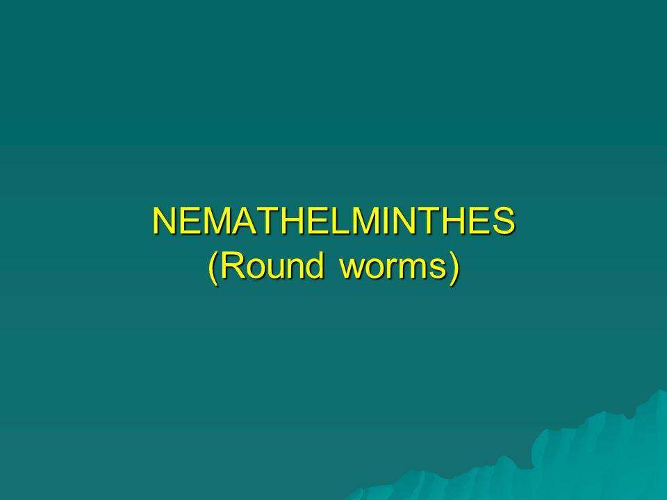 NEMATHELMINTHES (Round worms)