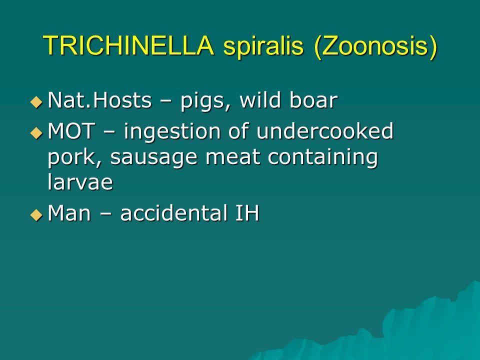 TRICHINELLA spiralis (Zoonosis)  Nat.Hosts – pigs, wild boar  MOT – ingestion of undercooked pork, sausage meat containing larvae  Man – accidental