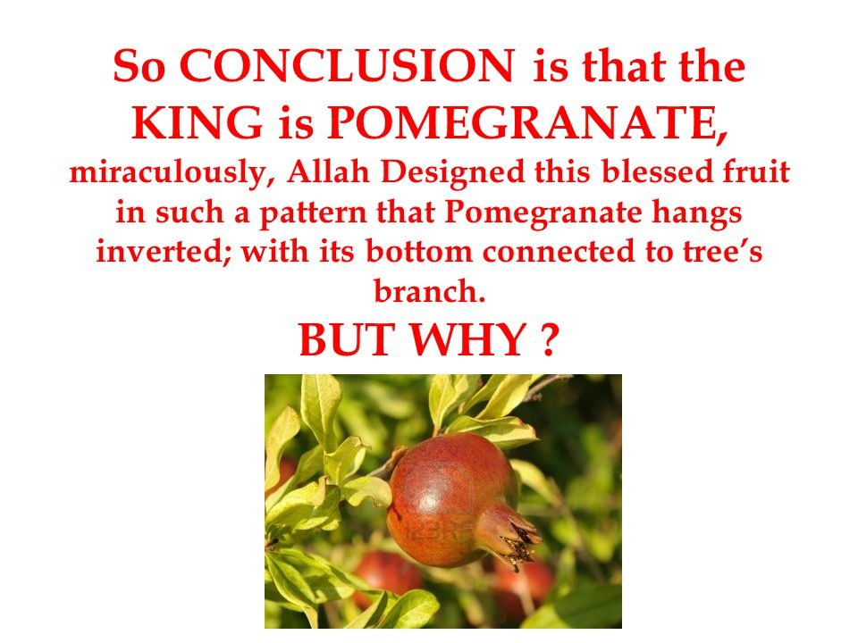 So CONCLUSION is that the KING is POMEGRANATE, miraculously, Allah Designed this blessed fruit in such a pattern that Pomegranate hangs inverted; with its bottom connected to tree's branch.