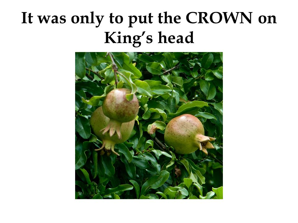 It was only to put the CROWN on King's head