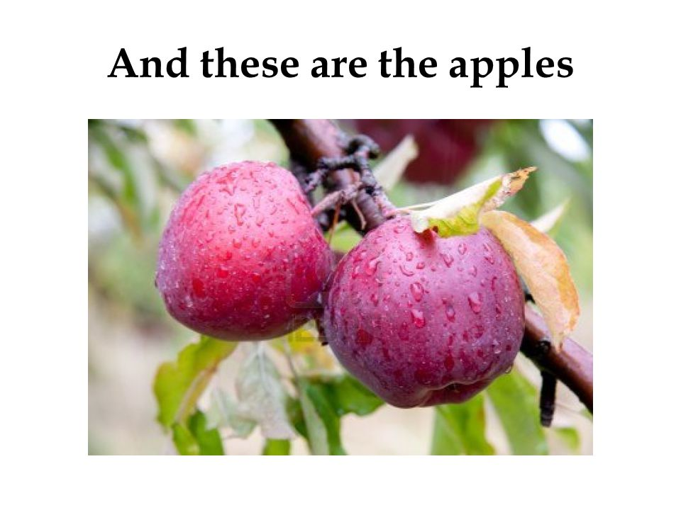 And these are the apples