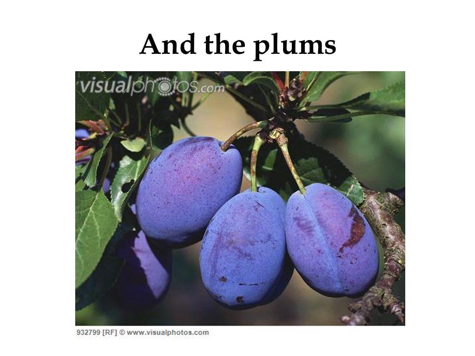 The Durian & Jackfruit