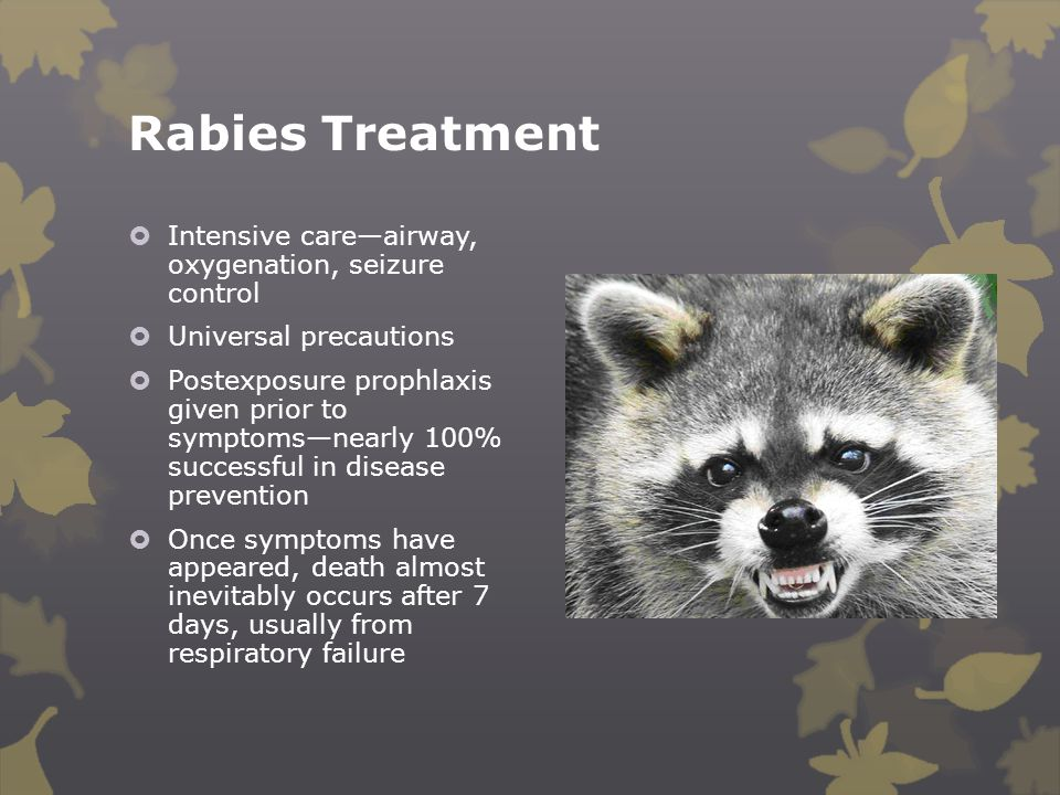 Rabies Treatment  Intensive care—airway, oxygenation, seizure control  Universal precautions  Postexposure prophlaxis given prior to symptoms—nearl