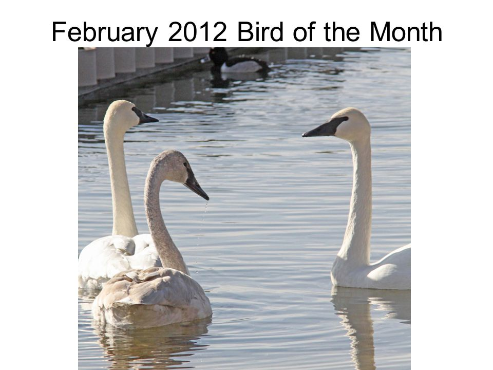 February 2012 Bird of the Month
