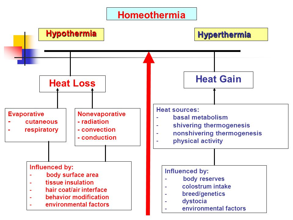 Figure 1. Thermal balance between heat loss and heat gain in neonatal ruminants. (Modified from Carstens, 1994) Hyperthermia Heat Loss Heat Gain Evapo