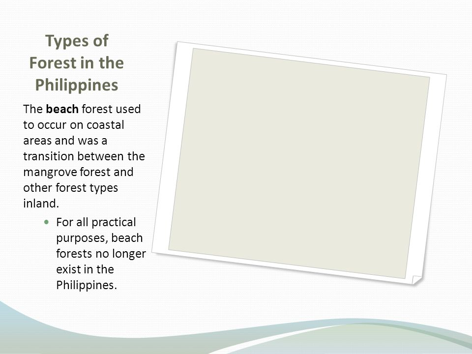 Types of Forest in the Philippines The beach forest used to occur on coastal areas and was a transition between the mangrove forest and other forest types inland.