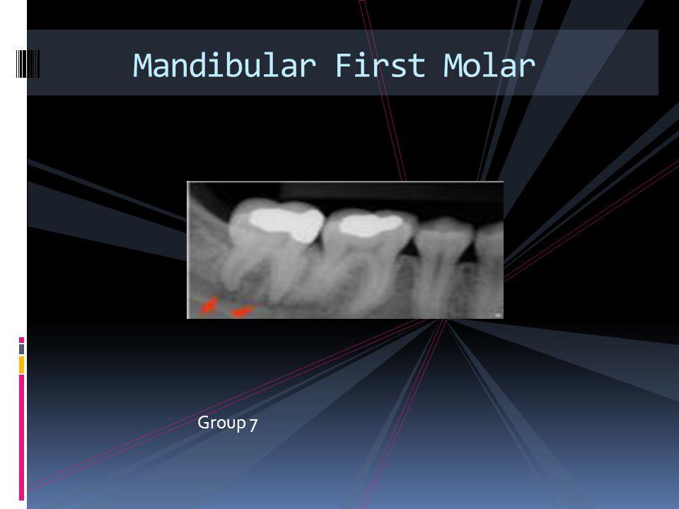 Group 7 Mandibular First Molar