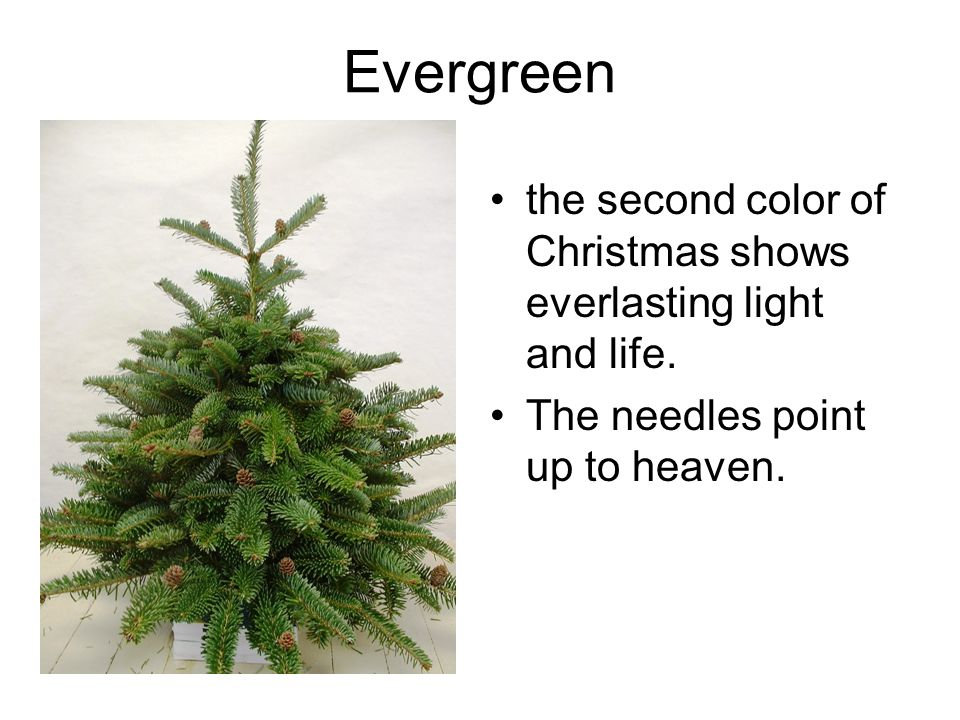Evergreen the second color of Christmas shows everlasting light and life.