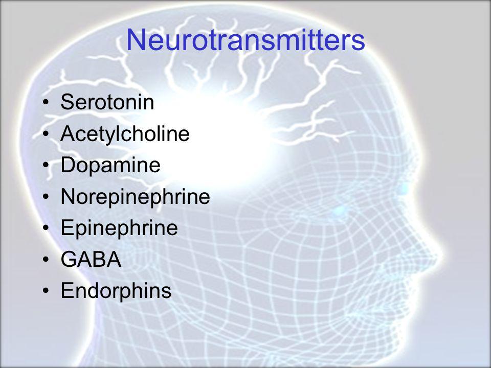 Neurotransmitters Serotonin Acetylcholine Dopamine Norepinephrine Epinephrine GABA Endorphins