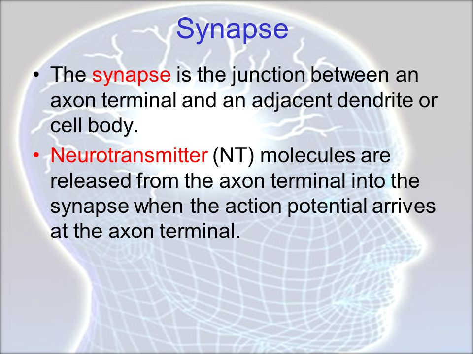 Limbic System  The fornix is a C-shaped bundle of fibres (axons) in the brain, and carries signals from the hippocampus to the mammillary bodies and septal nuclei.