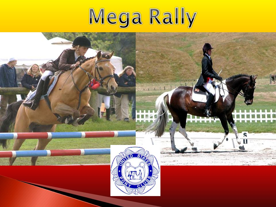  Proper Attire: -Rider: Club polo, ASTM/SEI helmet, gloves, riding crop, riding pants/kakis, and clean sturdy paddock boots -Horse: Only has to wear a bridle (cleaned and well oiled w/ clean bit) and should be groomed to the standards of the competitors' rating