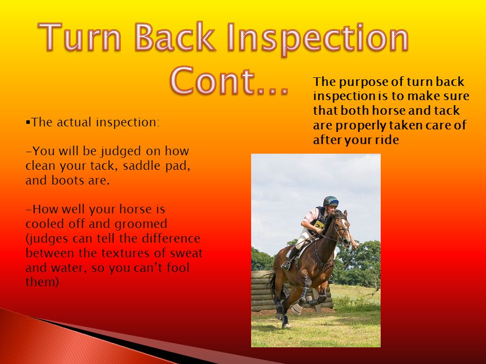  The actual inspection: -You will be judged on how clean your tack, saddle pad, and boots are.