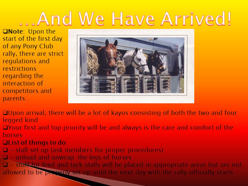  Upon arrival, there will be a lot of kayos consisting of both the two and four legged kind  Your first and top priority will be and always is the care and comfort of the horses  List of things to do:  - stall set up (ask members for proper procedures)  - unload and unwrap the legs of horses  - stuff for feed and tack stalls will be placed in appropriate areas but are not allowed to be properly set up until the next day with the rally officially starts  Note: Upon the start of the first day of any Pony Club rally, there are strict regulations and restrictions regarding the interaction of competitors and parents…