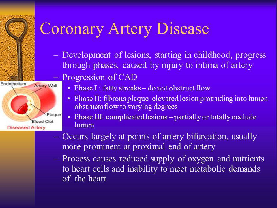 Coronary Artery Disease –Development of lesions, starting in childhood, progress through phases, caused by injury to intima of artery –Progression of