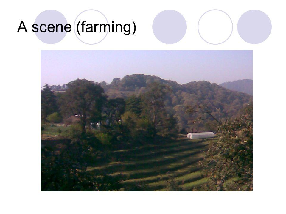 A scene (farming)