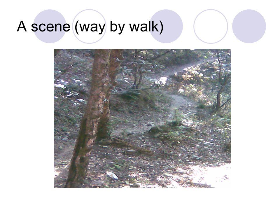 A scene (way by walk)