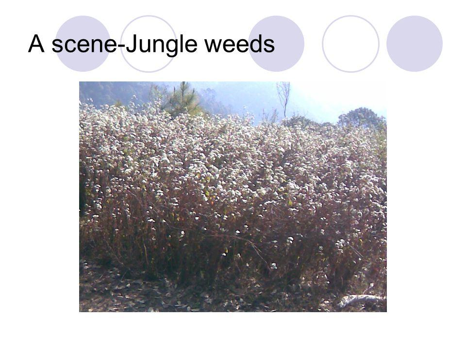 A scene-Jungle weeds