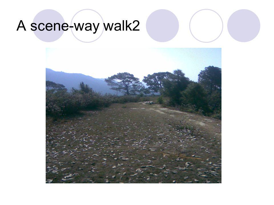 A scene-way walk2