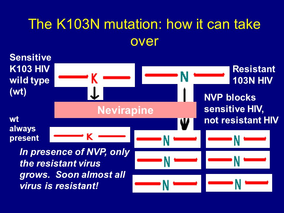 The K103N mutation: how it can take over Nevirapine Resistant 103N HIV Sensitive K103 HIV wild type (wt) NVP blocks sensitive HIV, not resistant HIV I