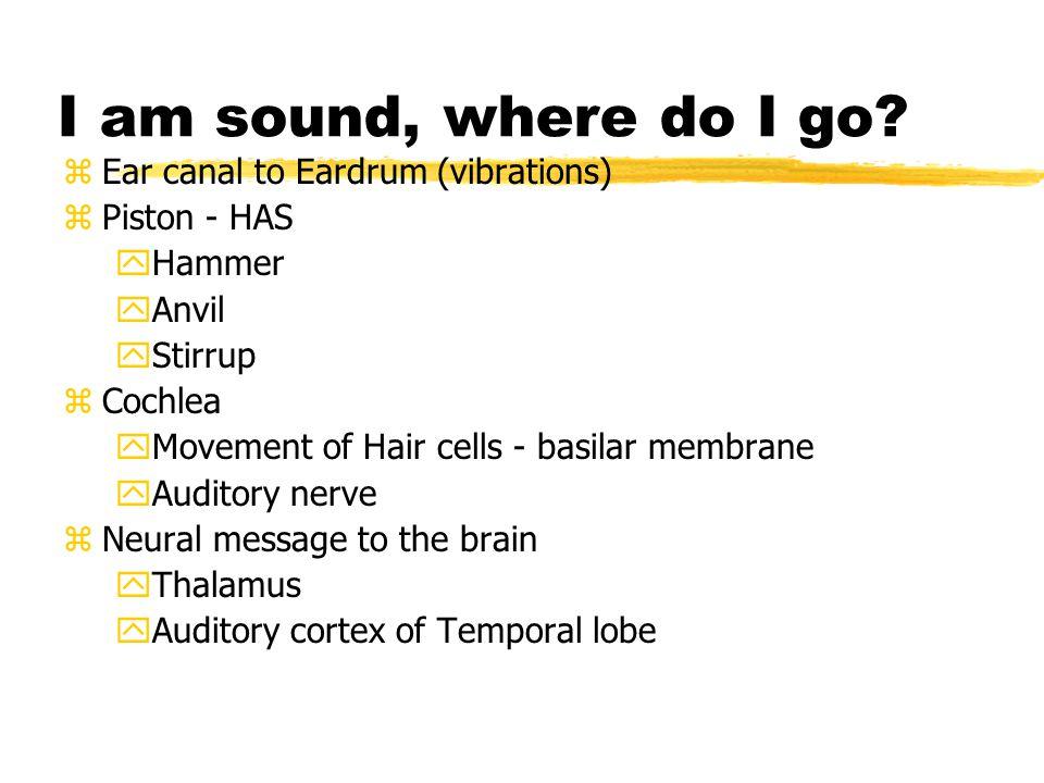 I am sound, where do I go.
