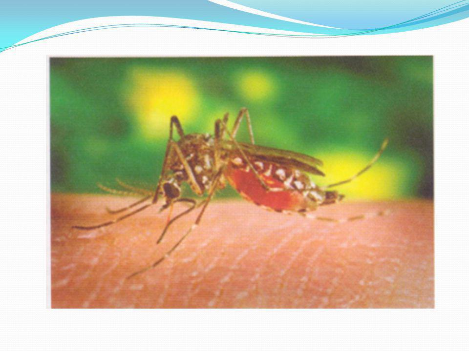 Malaria Plasmodium, by a mosquito bite- Anopheles Multiplies in liver and then attacks the RBCs Fever, nausea, shivering, headache and may result in multi-organ failure or even death Dormant in liver for months