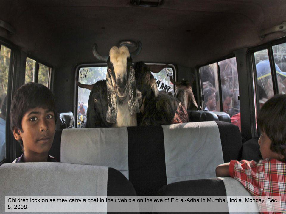 Children look on as they carry a goat in their vehicle on the eve of Eid al-Adha in Mumbai, India, Monday, Dec. 8, 2008.