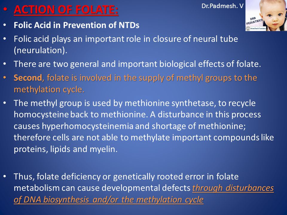 Dr.Padmesh. V ACTION OF FOLATE: ACTION OF FOLATE: Folic Acid in Prevention of NTDs Folic acid plays an important role in closure of neural tube (neuru