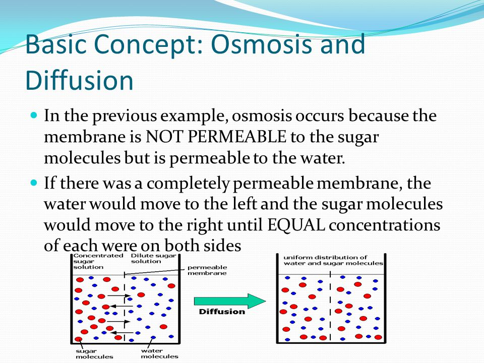 Basic Concept: Osmosis and Diffusion In the previous example, osmosis occurs because the membrane is NOT PERMEABLE to the sugar molecules but is permeable to the water.