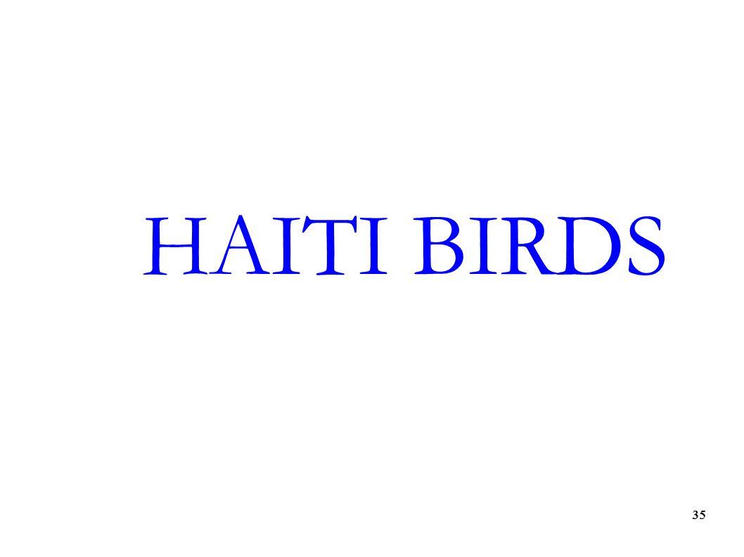 35 HAITI BIRDS