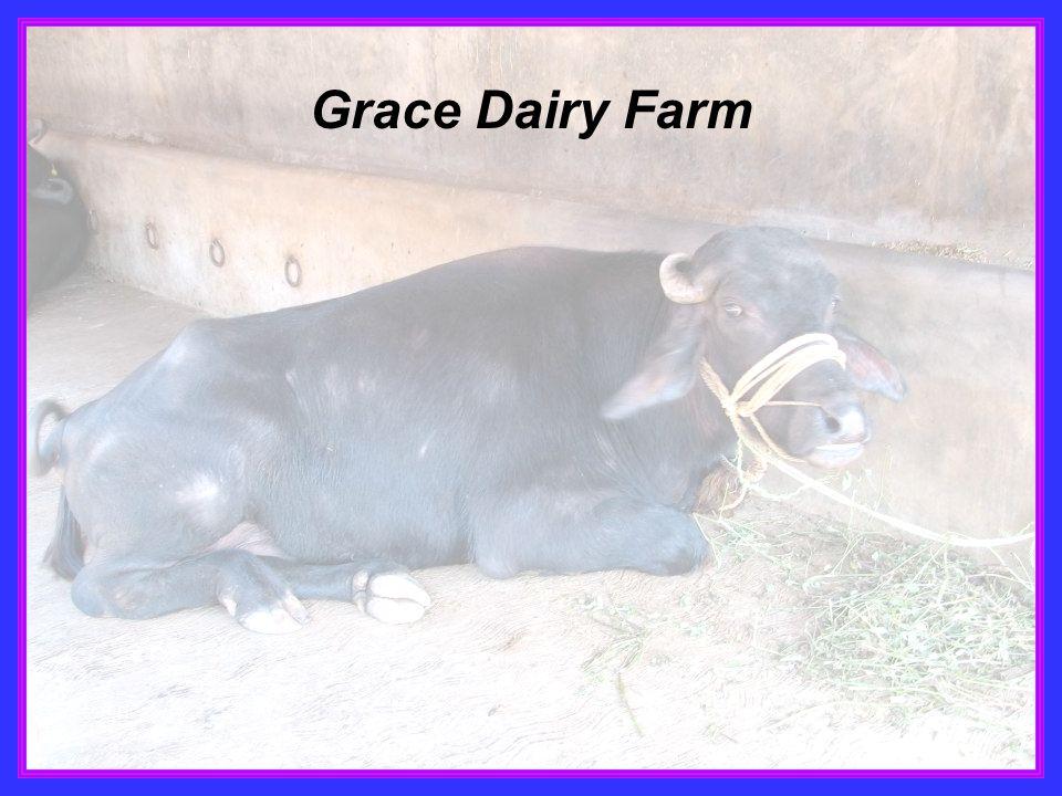 Grace Dairy Farm