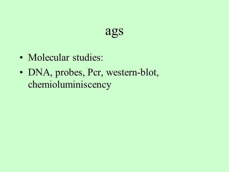 ags Molecular studies: DNA, probes, Pcr, western-blot, chemioluminiscency