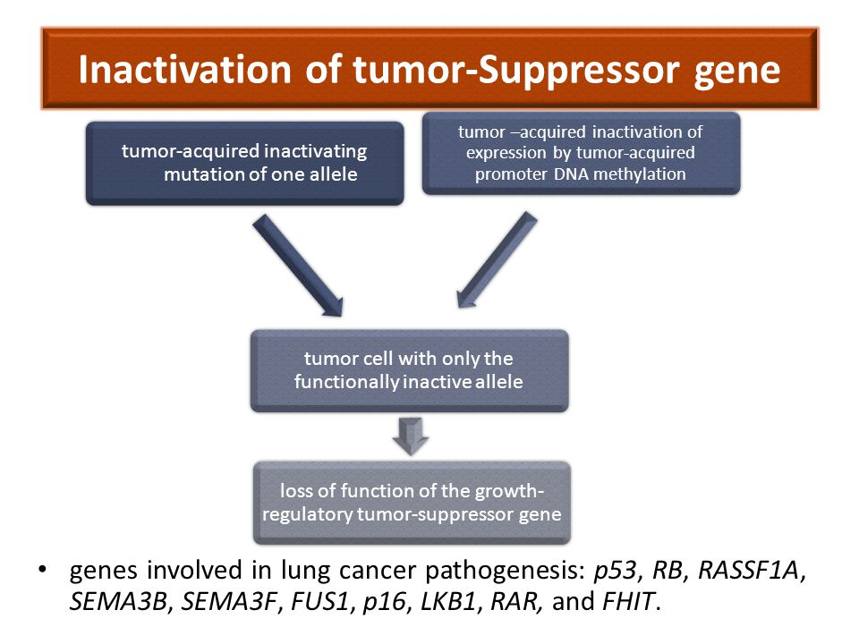 Inactivation of tumor-Suppressor gene genes involved in lung cancer pathogenesis: p53, RB, RASSF1A, SEMA3B, SEMA3F, FUS1, p16, LKB1, RAR, and FHIT.