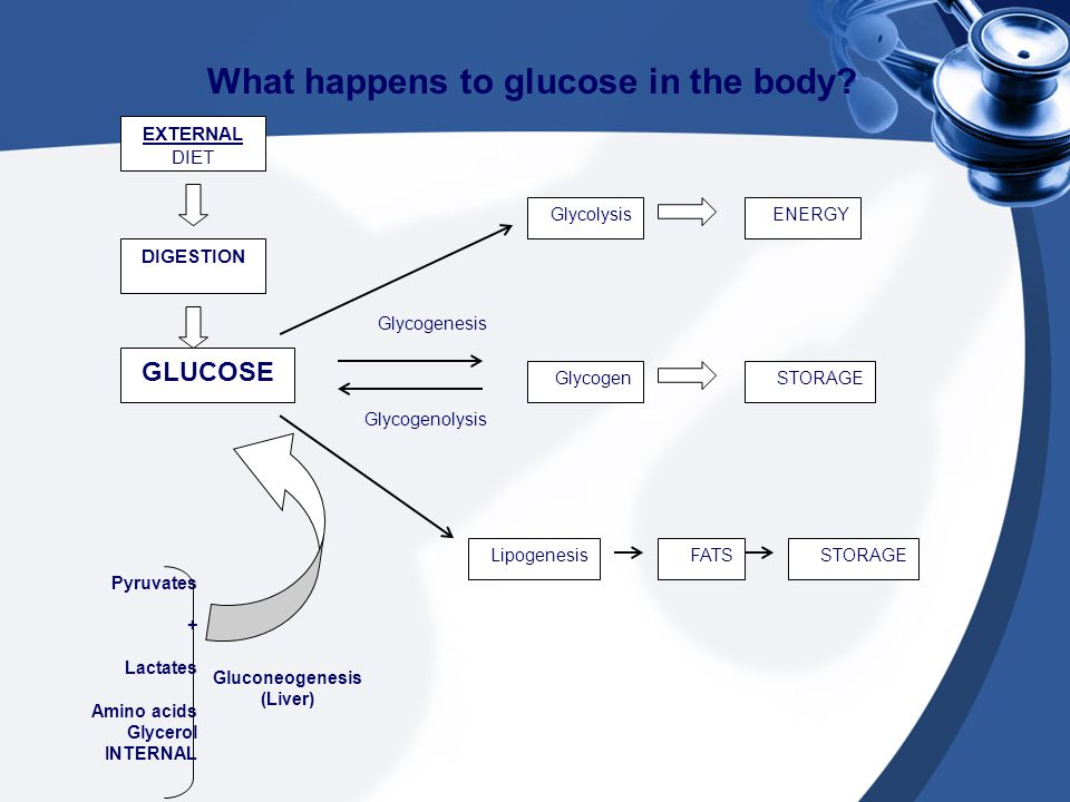 What happens to glucose in the body? EXTERNAL DIET DIGESTION GLUCOSE GlycolysisENERGY GlycogenSTORAGE LipogenesisFATSSTORAGE Glycogenesis Glycogenolys