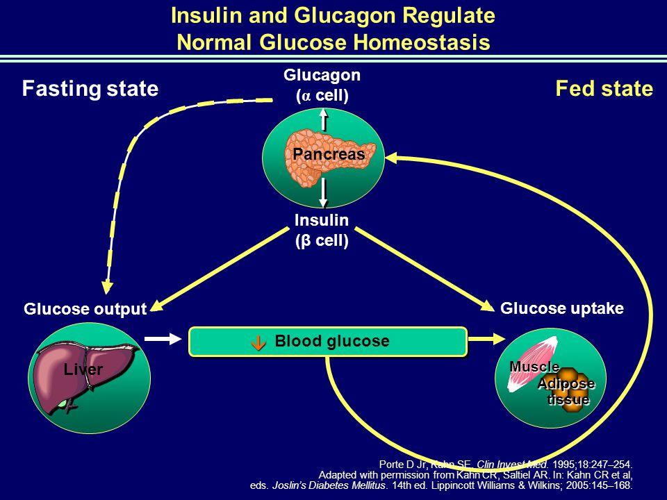 Blood glucose  Insulin and Glucagon Regulate Normal Glucose Homeostasis Glucose output Glucose uptake Glucagon ( α cell) Insulin (β cell) Pancreas Li