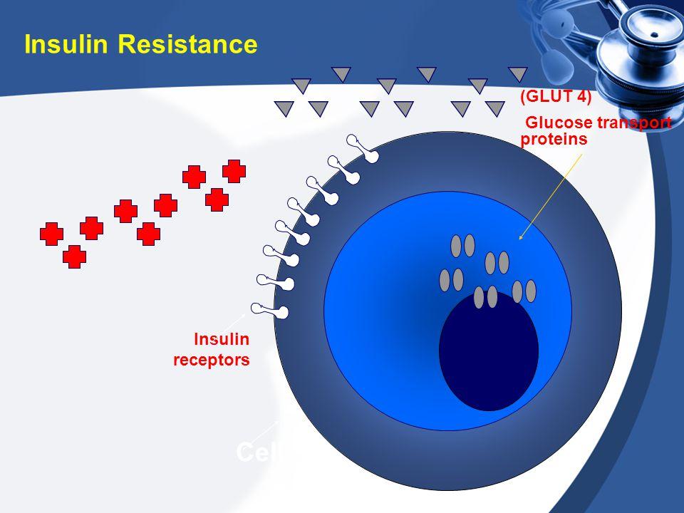 Insulin receptors (GLUT 4) Glucose transport proteins Cell Insulin Resistance