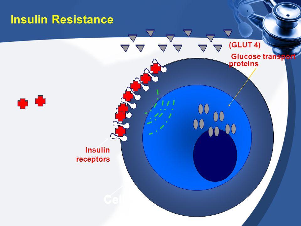 Insulin receptors Cell Insulin Resistance Insulin receptors (GLUT 4) Glucose transport proteins Cell